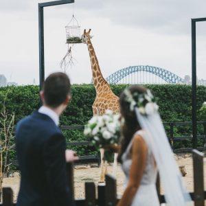Epicure at Taronga Zoo, Unique Wedding Venue, Bride and Groom Wedding Photo with Giraffe