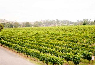 Fergusson Winery, vineyard wedding venue, external view